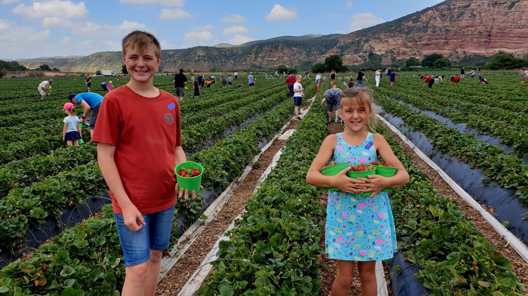 Mooihoek Pick your own Strawberries