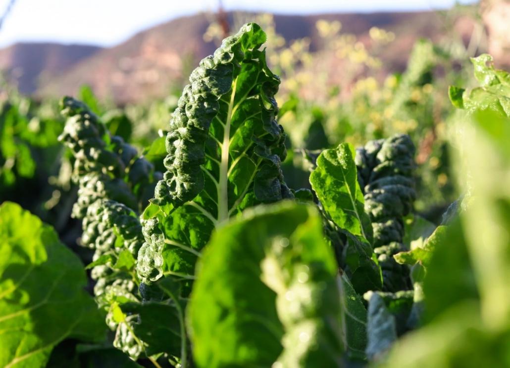 IMMooihoek Spinach