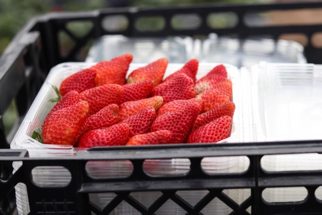 Mooihoek Strawberry